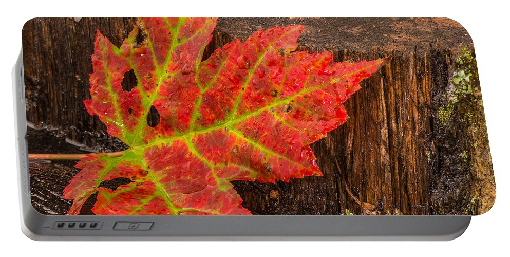 Still Life Portable Battery Charger featuring the photograph Maple Leaf On Oak Stump by Paul Freidlund