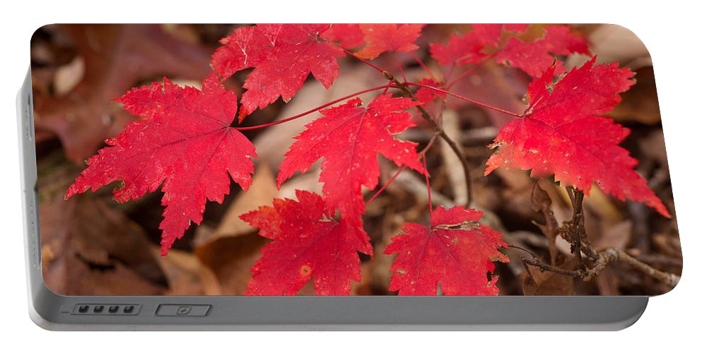 Red Portable Battery Charger featuring the photograph Maple Leaf Palette by Douglas Barnett