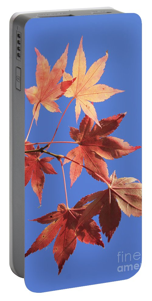 Maple Leaves Red Golden Gold Leaf Blue Sky Acer Fall Autumn Autumnal 6 Six Portable Battery Charger featuring the photograph Maple Leaves by Julia Gavin