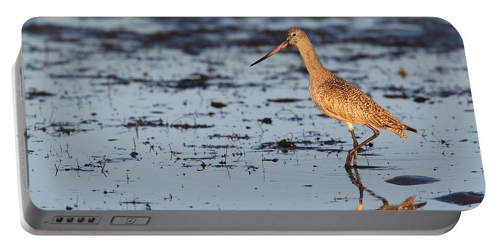 Marbled Godwit Portable Battery Charger featuring the photograph Marbled Godwit At Sunset by Bryan Keil