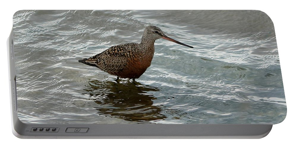 Marbled Godwit Portable Battery Charger featuring the photograph Marbled Godwit by Lori Tordsen
