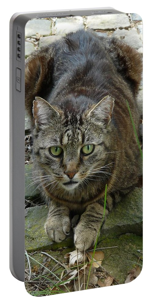Cat Portable Battery Charger featuring the photograph Marco by Valerie Ornstein