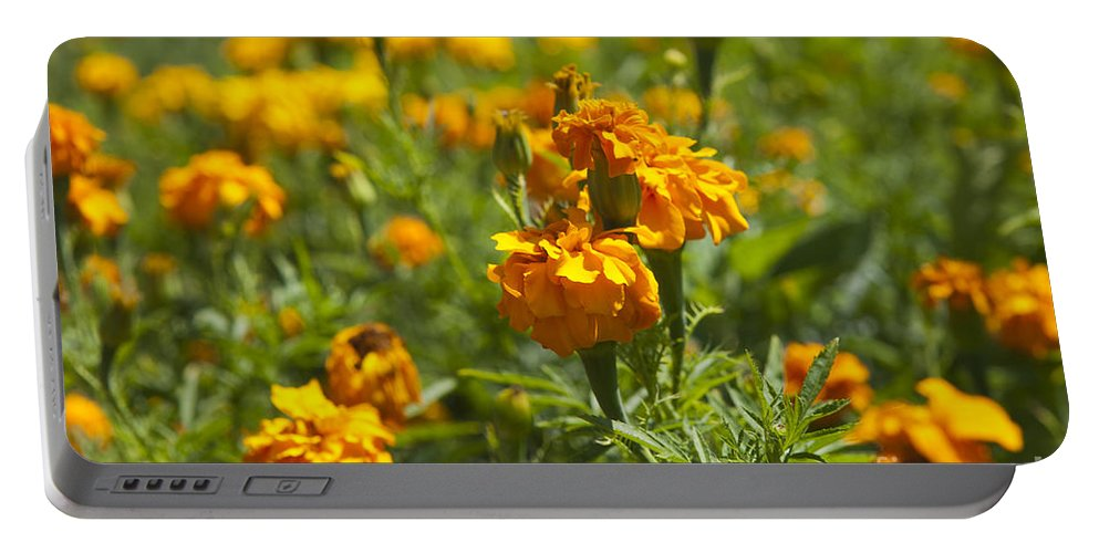 Marigold Portable Battery Charger featuring the photograph Marigold Flowers by Jason O Watson