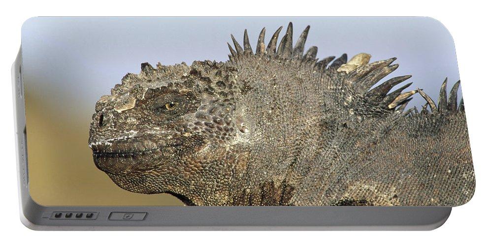 Feb0514 Portable Battery Charger featuring the photograph Marine Iguana Male Santa Cruz Island by Tui De Roy