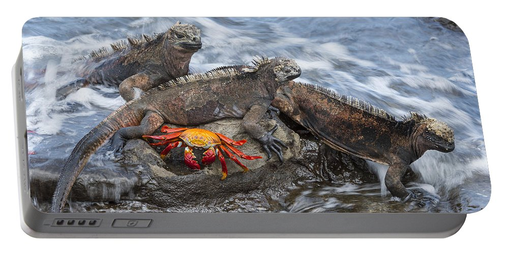 Tui De Roy Portable Battery Charger featuring the photograph Marine Iguana Trio And Sally Lightfoot by Tui De Roy