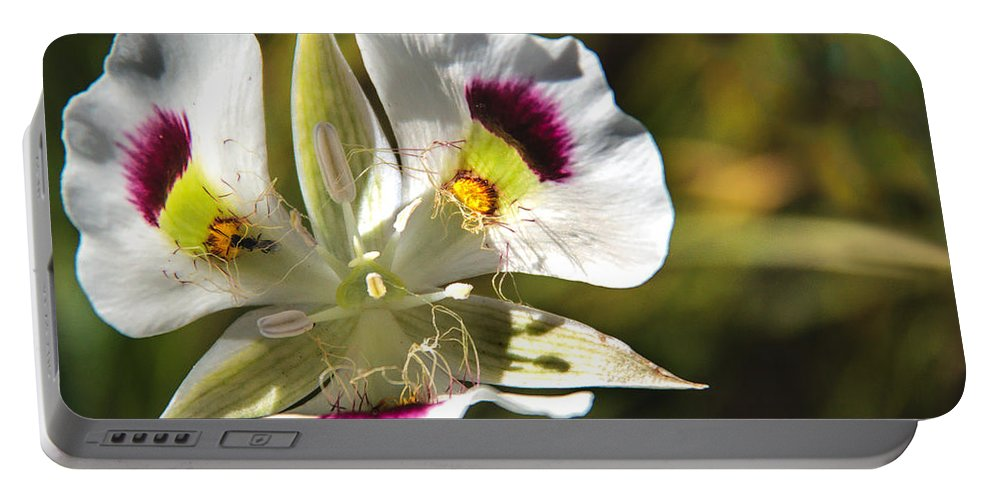 Wild Flowers Portable Battery Charger featuring the photograph Mariposa Lily by Robert Bales