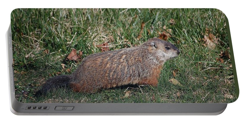 Woodchuck Portable Battery Charger featuring the photograph Marmota Monax Model by Rachel Kaufmann