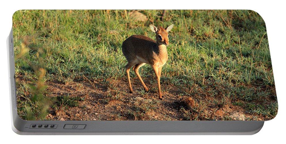 Africa Portable Battery Charger featuring the photograph Masai Mara Dikdik Deer by Aidan Moran