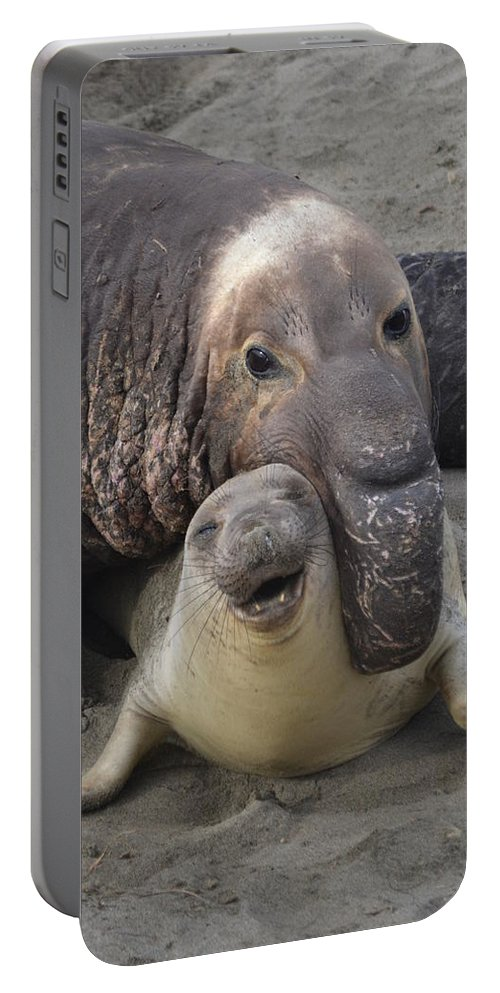 Cambria Portable Battery Charger featuring the photograph Mating Fun by Christine Owens