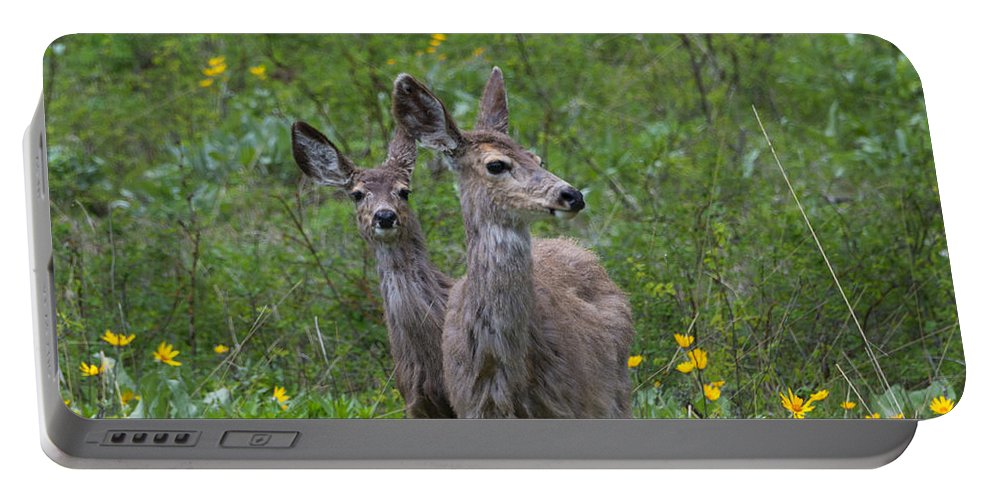 Deer Portable Battery Charger featuring the photograph Meadow Meal by Mike Dawson