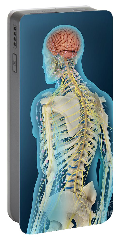 Vertical Portable Battery Charger featuring the digital art Medical Illustration Of Human Brain by Stocktrek Images