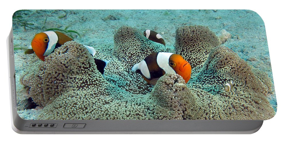 Clown Fish Portable Battery Charger featuring the photograph Meet The Nemo Family by Paul Ranky
