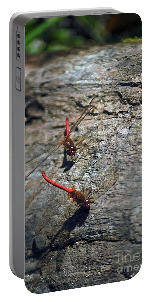 Dragonflies Portable Battery Charger featuring the photograph Meeting by Joseph Yarbrough