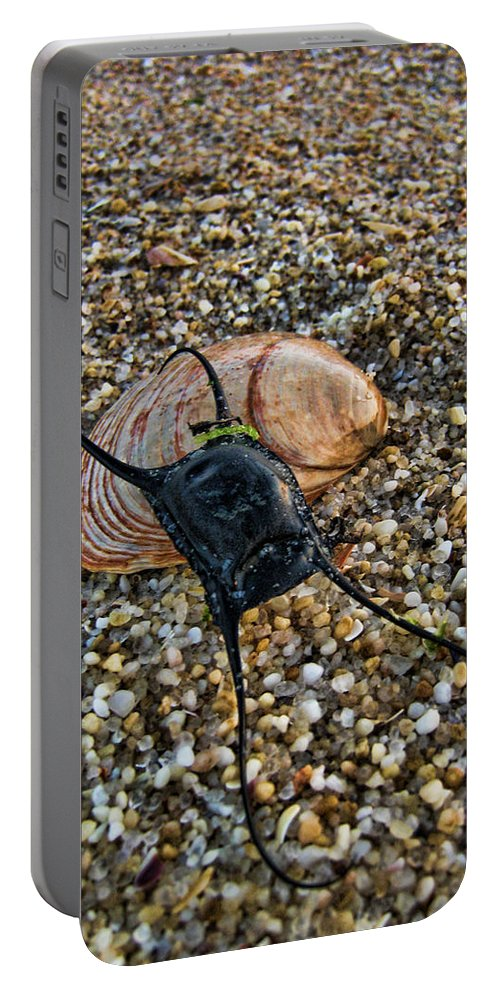 Mermaids Purse Portable Battery Charger featuring the photograph Mermaids Purse by Heather Applegate