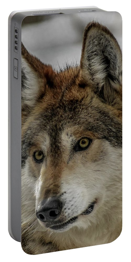 Wolf Portable Battery Charger featuring the photograph Mexican Grey Wolf Upclose by Ernie Echols