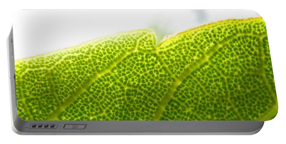 Leaf Portable Battery Charger featuring the photograph Micro Leaf by Rhonda Barrett