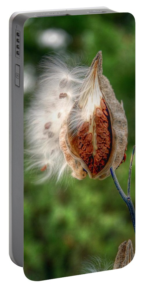 Milkweed Portable Battery Charger featuring the photograph Milkweed by Linda Covino