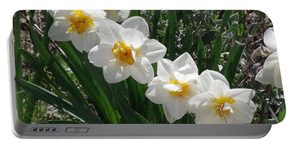Flowers Portable Battery Charger featuring the photograph Miner's Wife Daffodils by Mike and Sharon Mathews