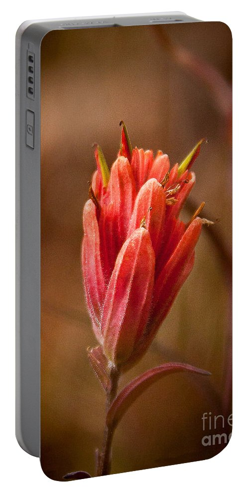 Nature Portable Battery Charger featuring the photograph Miniature Indian Paintbrush by Steven Reed