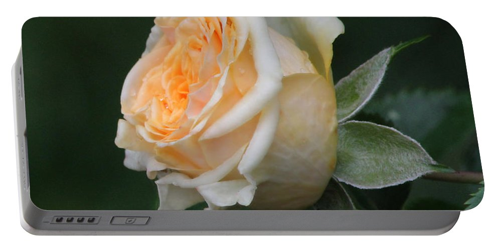 Rose Portable Battery Charger featuring the photograph Miniature Rose In The Rain by Jeanette C Landstrom