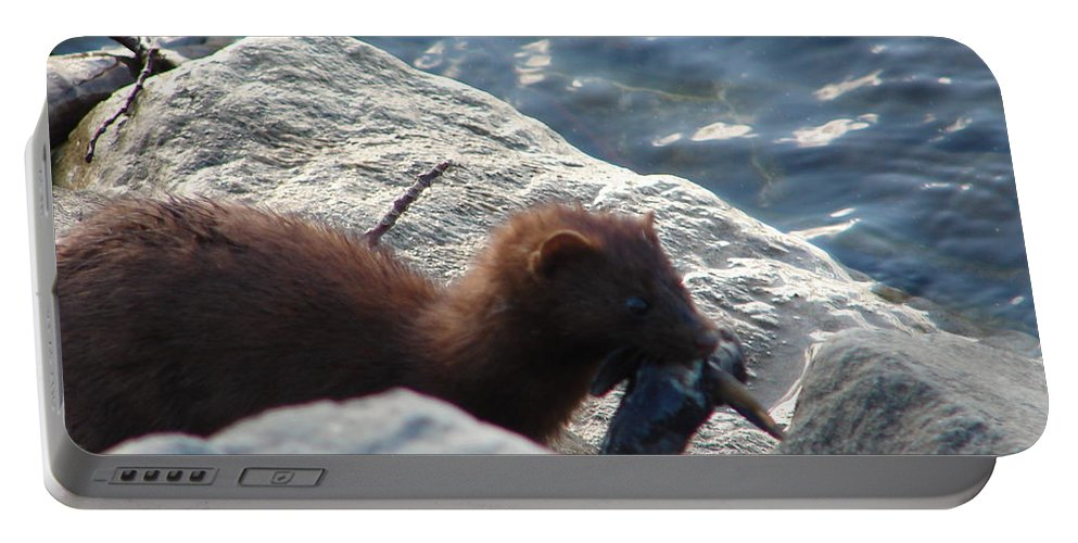 American Mink Portable Battery Charger featuring the photograph Mink with a Round Goby by Randy J Heath