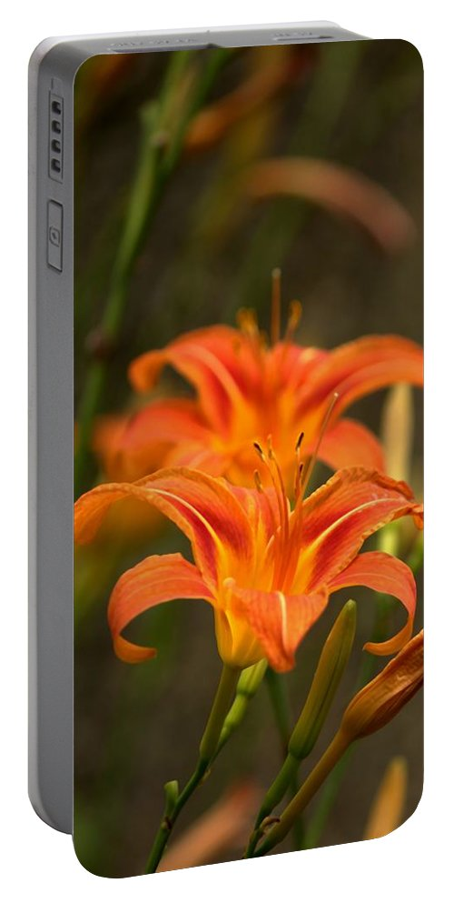 Mirror Portable Battery Charger featuring the photograph Mirrored Close Up by John Feiser
