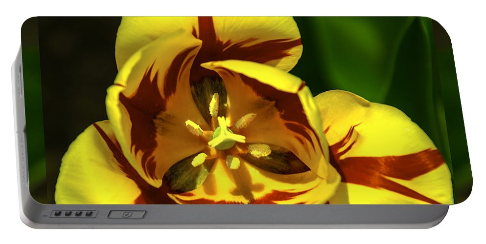Usa Portable Battery Charger featuring the photograph Mirrored Tulip Time by LeeAnn McLaneGoetz McLaneGoetzStudioLLCcom