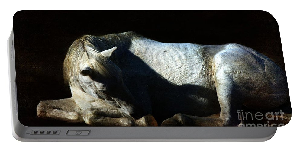 Horse Portable Battery Charger featuring the photograph Misty by Annette Coady