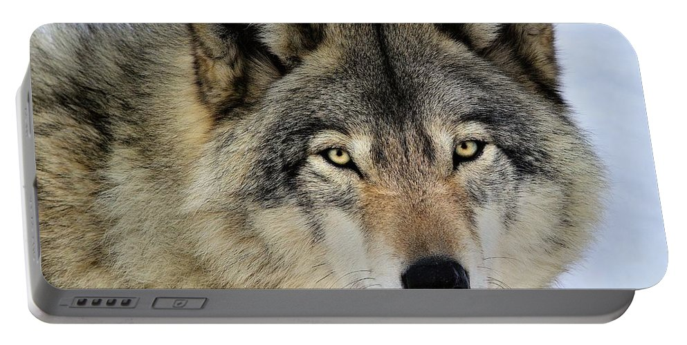 Timber Wolf Portable Battery Charger featuring the photograph Misunderstood by Tony Beck