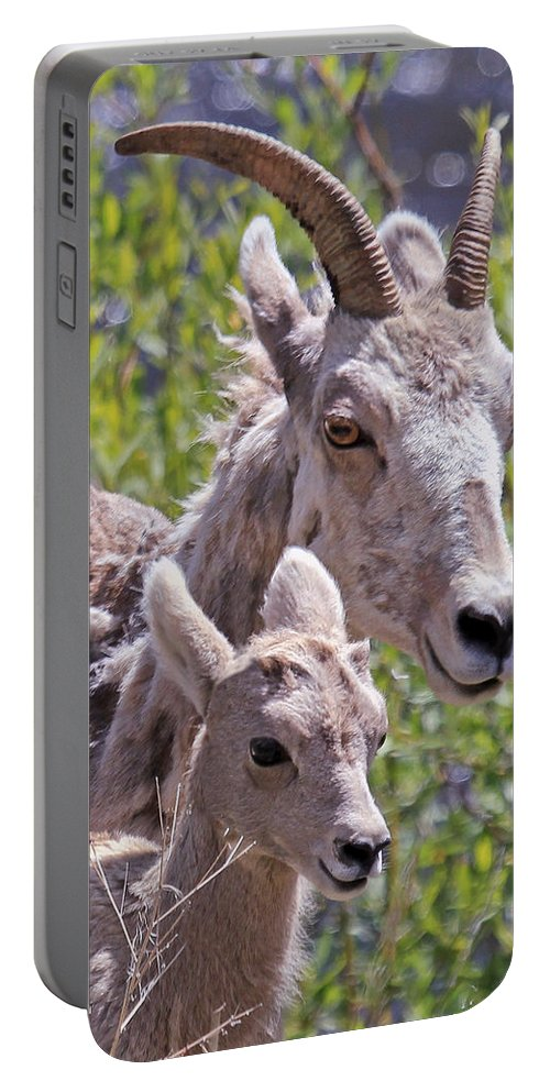 Bighorn Sheep Portable Battery Charger featuring the photograph Momma And Baby Ram by Athena Mckinzie