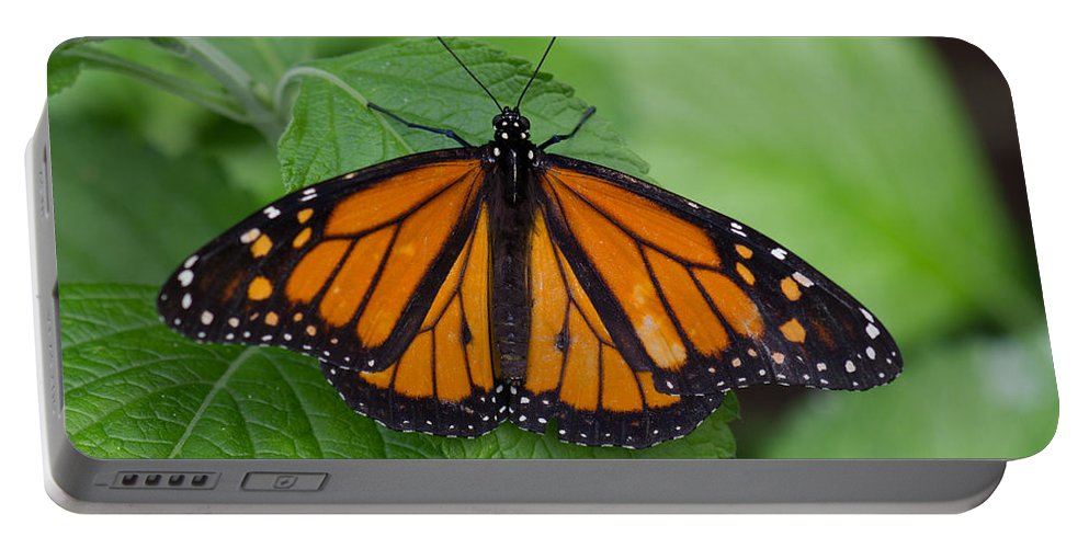 Brookside Gardens Portable Battery Charger featuring the photograph Monarch 3 by Leah Palmer