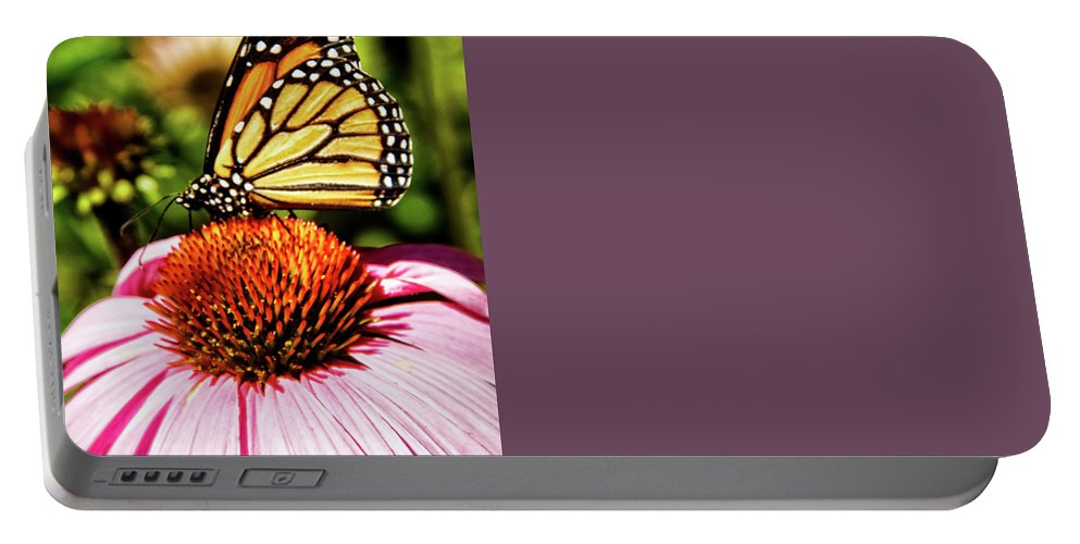 Butterfly Portable Battery Charger featuring the photograph Swallowtail Butterfly by Robert Bales