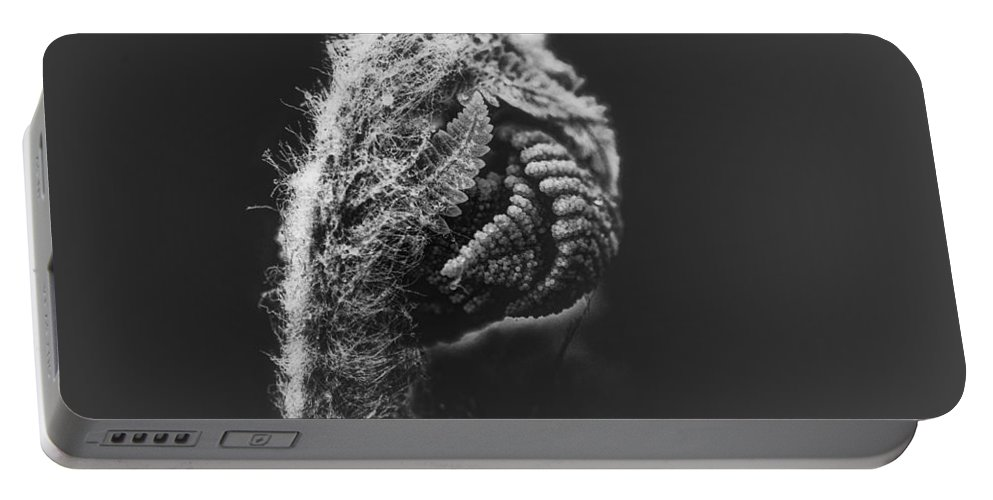 Fern Portable Battery Charger featuring the photograph Monday Morning by Susan Capuano