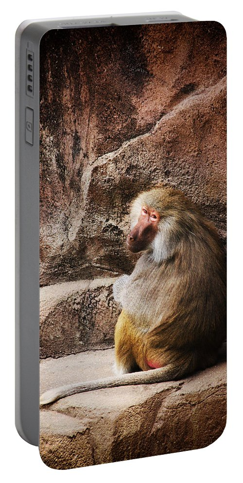 Monkey Portable Battery Charger featuring the photograph Monkey Business by Karol Livote