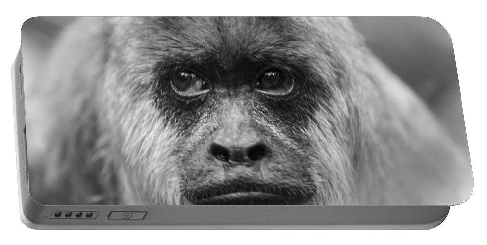 Monkey Portable Battery Charger featuring the photograph Monkey Eyes by Karol Livote