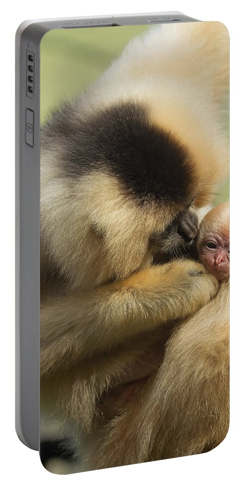 Motherhood Portable Battery Charger featuring the photograph Monkey Mother by Jaroslav Frank