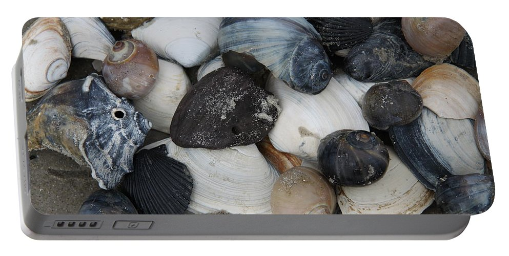 Moon Snails Portable Battery Charger featuring the photograph Moon Snails And Shells Still Life by Christiane Schulze Art And Photography