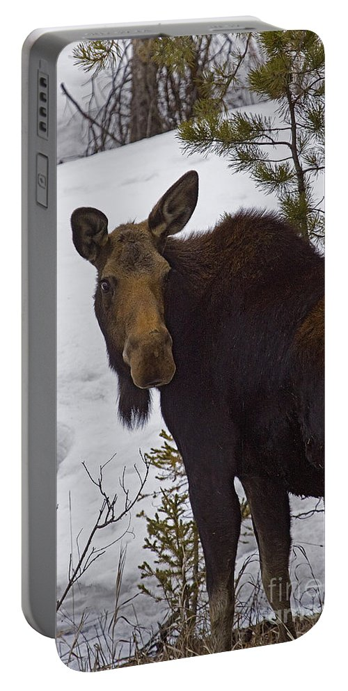 Alces Alces Portable Battery Charger featuring the photograph Moose  #1612 by J L Woody Wooden