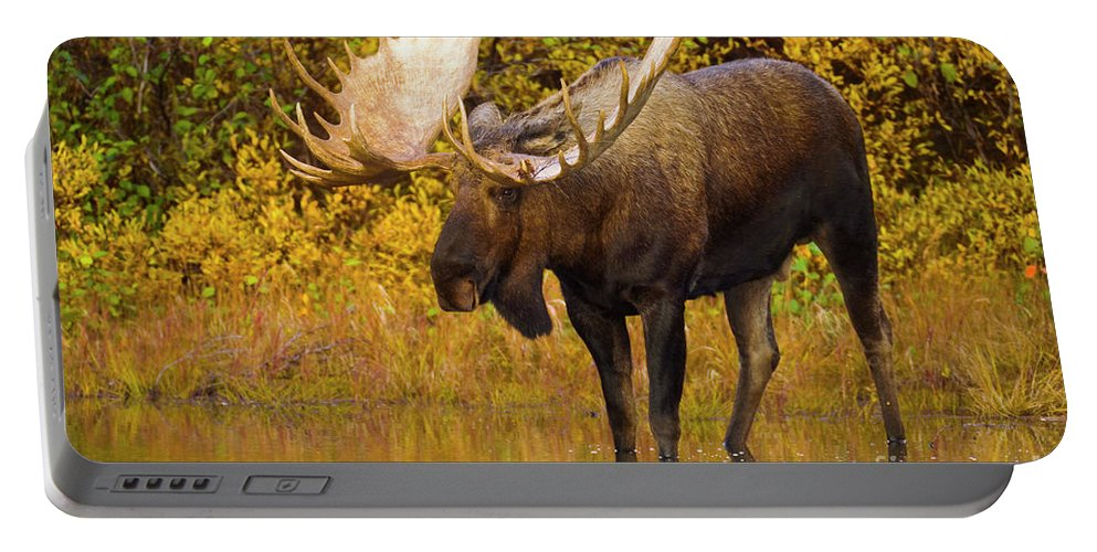 00345399 Portable Battery Charger featuring the photograph Moose In Glacial Kettle Pond by Yva Momatiuk John Eastcott