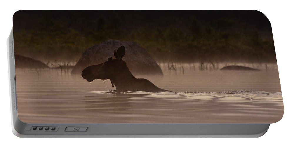 Moose Portable Battery Charger featuring the photograph Moose Swim by Brent L Ander