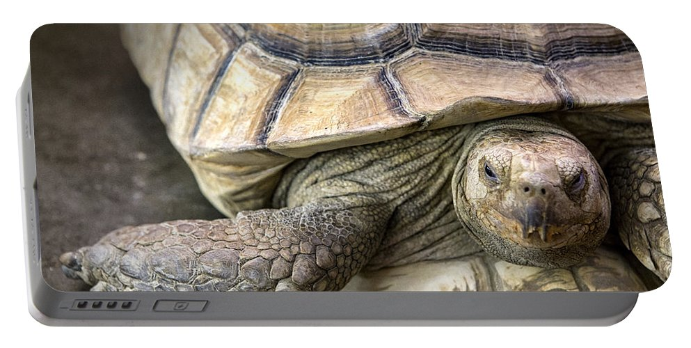 Tortoise Portable Battery Charger featuring the photograph Morla by Caitlyn Grasso