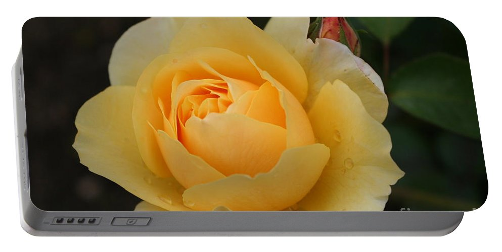 Rose Portable Battery Charger featuring the photograph Morning Dew Rose by Christiane Schulze Art And Photography