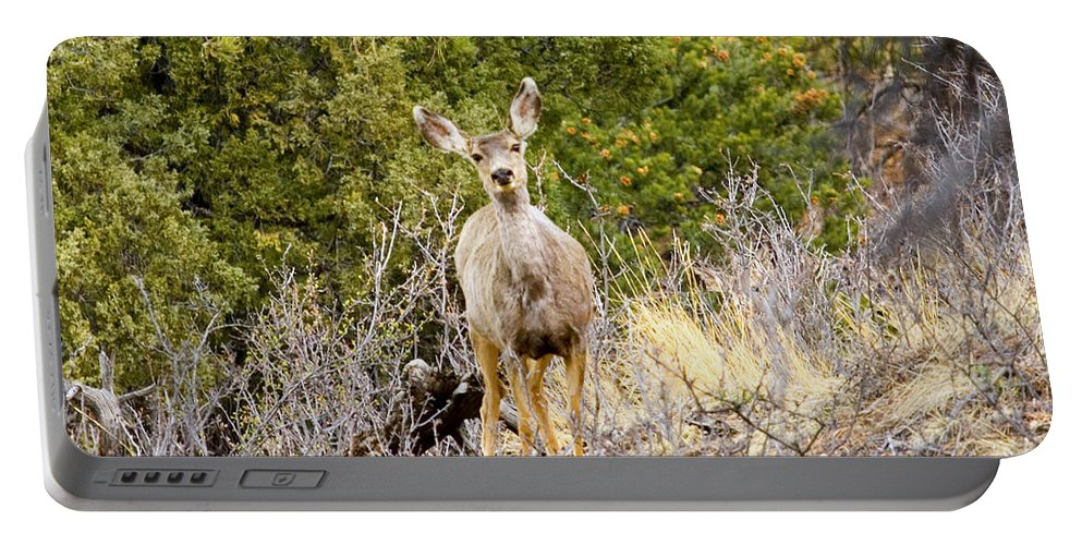 Deer Portable Battery Charger featuring the photograph Morning Does by Steve Krull