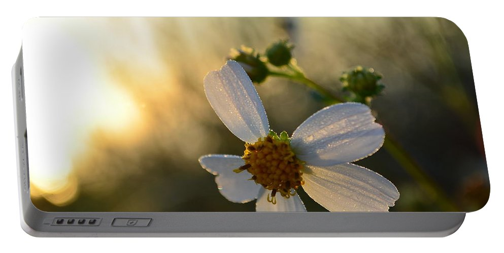 Flower Portable Battery Charger featuring the photograph Morning Flower by Wayne Schmitt
