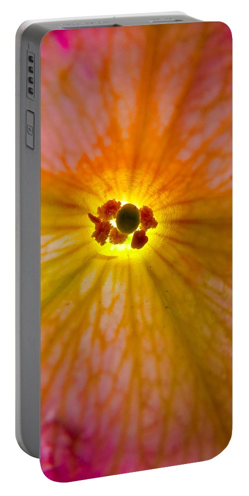 Tulip Portable Battery Charger featuring the photograph Morning Glories by Art Dingo
