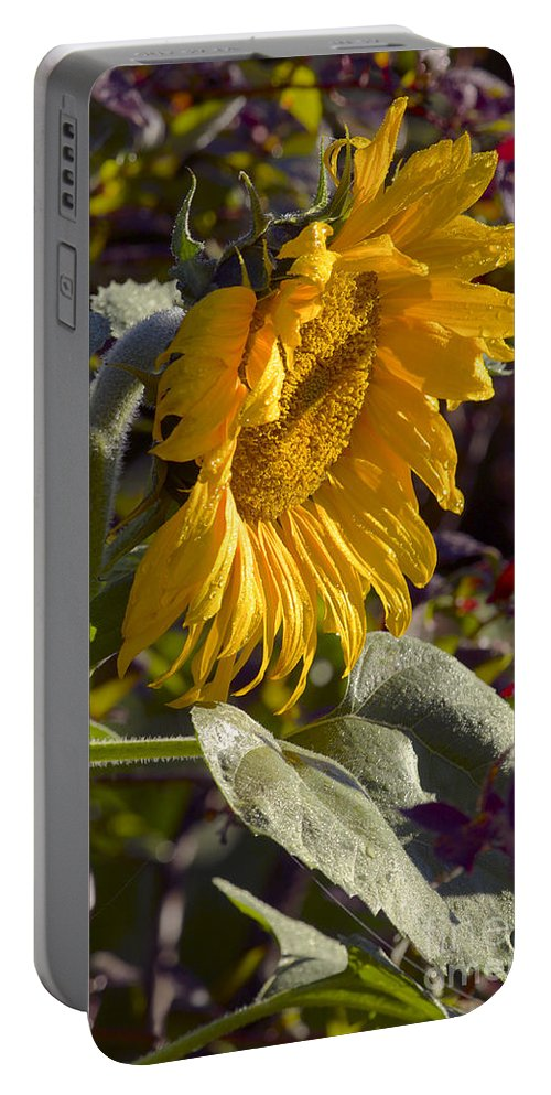 Sunflower Portable Battery Charger featuring the photograph Morning Sunshine by Sharon Talson