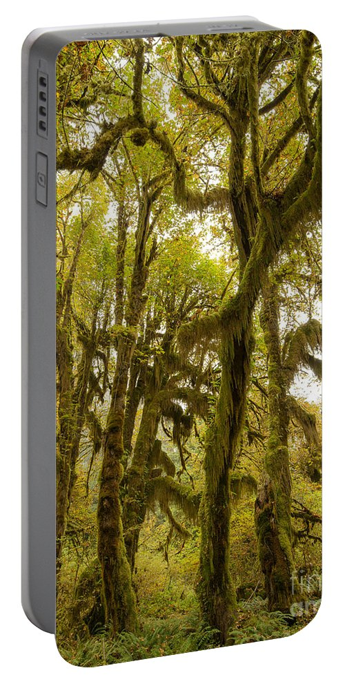 Ferns Portable Battery Charger featuring the photograph Moss-covered Maple Grove by Tracy Knauer