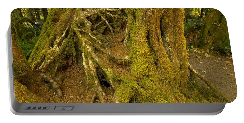 Ferns Portable Battery Charger featuring the photograph Moss-covered Tree Trunks by Tracy Knauer