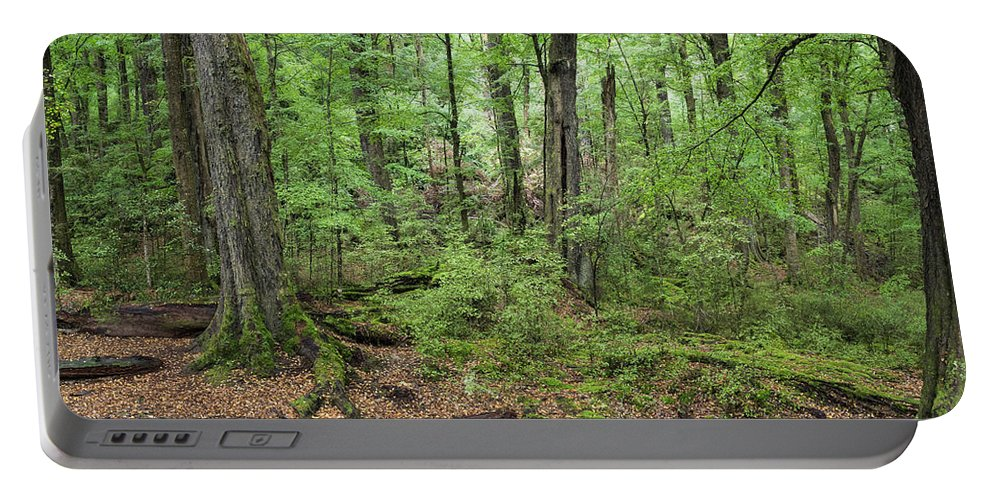 Photography Portable Battery Charger featuring the photograph Moss Covered Trees In Forest, Lord by Panoramic Images