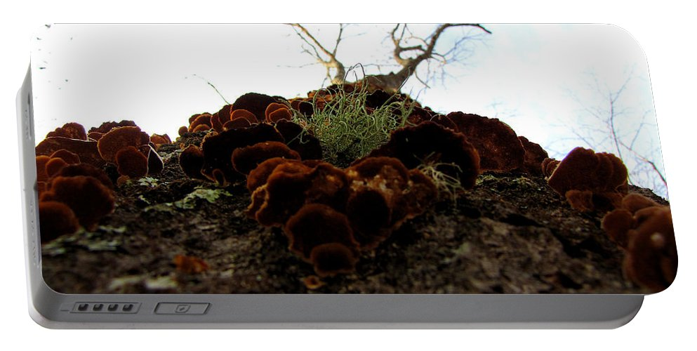 Portable Battery Charger featuring the photograph Moss In Fungus by Sarah Houser
